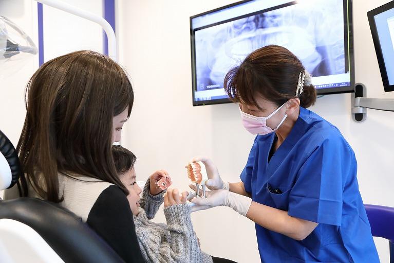 永久歯への生え変わりの時期(交換期)