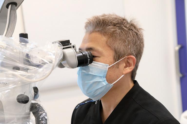 歯髄幹細胞の移植